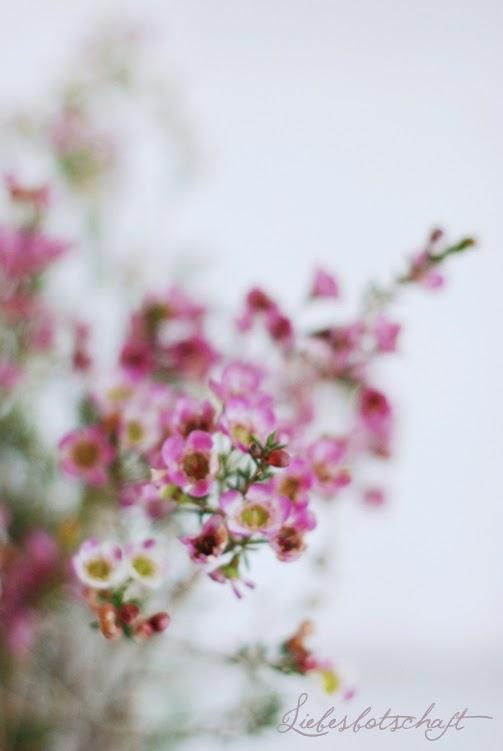 Pastel Love Blumendeko Tipps Im Januar Liebesbotschaft Blog