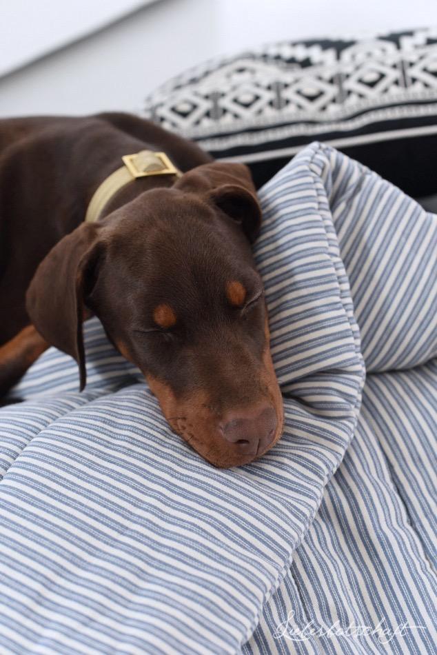 Vom Glück einen Hund zu haben: Nichts bleibt so, wies war (German Edition)